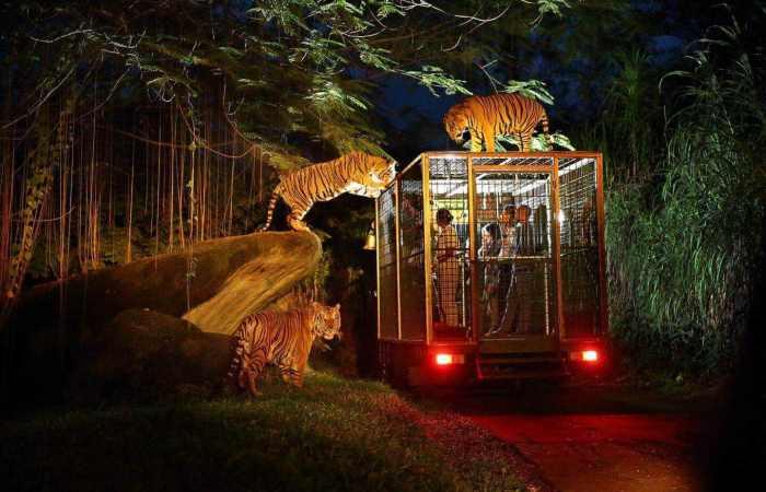 7 Aktivitas Menarik Dilakukan Saat Malam di Singapura